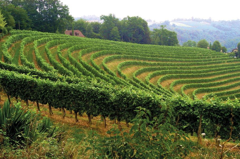 Ecowijnen uit Bourgogne